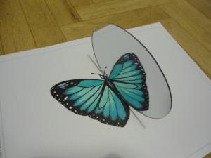 butterfly___mirror_symmetry__by_lorenius11-d5oxoa8